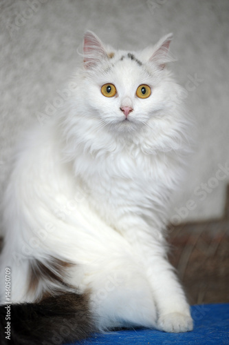1e790c8baa Turkish van cat - Buy this stock photo and explore similar images at ...