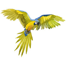 Sky Bird Parrot Macaw In A Wildlife By Watercolor Style Isolated.