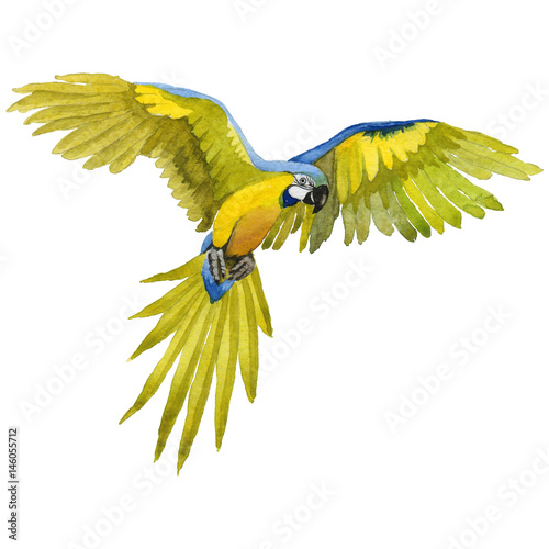 Photo Sky bird parrot macaw in a wildlife by watercolor style isolated.