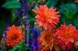 canvas print picture - Blumen, pflanze, Garten, Hintergrund, Blühen, natur, Regen, Frühling, Sommer, Park