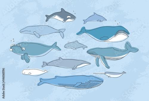 Fotografie, Tablou  Different whale set. Hand drawn doodle illustration collection.