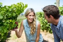 Happy Couple Looking At Grapes Growing At Vineyard
