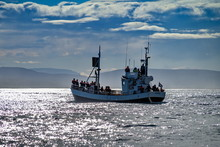 Whale Watching Boat In Husavik...
