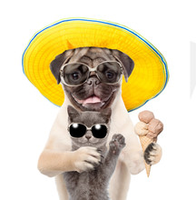 Funny Summer Dog With Ice Cream And Cat In Sunglasses. Isolated On White Background