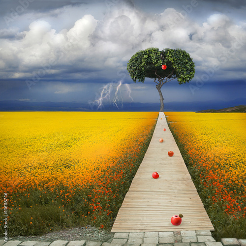 Fotografiet Biblical red apple of temptation