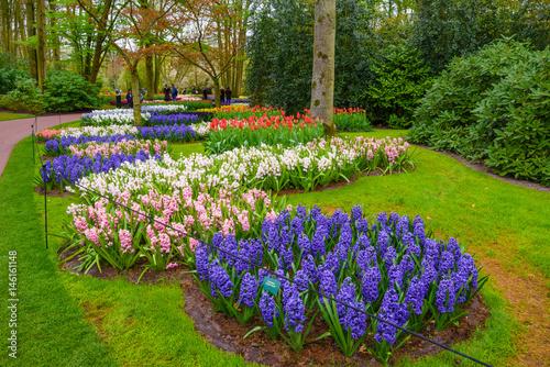 Papiers peints Jardin Fresh early spring pink, purple, white hyacinth bulbs. Flowerbed with hyacinths in Keukenhof park, Lisse, Holland, Netherlands