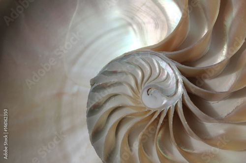 Fotografie, Obraz  nautilus shell symmetry Fibonacci half cross section spiral golden ratio structu