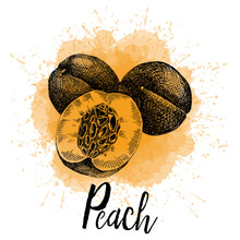 Vector Illustration, A Peach In Hand Drawn Graphics. Depicted On A Orange Watercolor Background