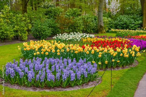 Canvas Prints Narcissus Tuilps and other flowers in Keukenhof park, Lisse, Holland, Netherlands.
