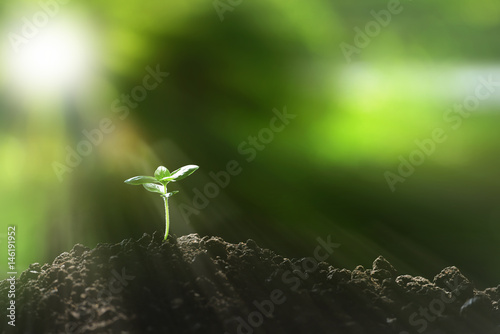 Poster Vegetal Young plant in the morning light on nature background
