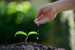 Hand watering a young plant on nature background