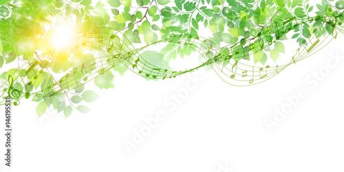 新緑 葉 春 背景  - 146195531
