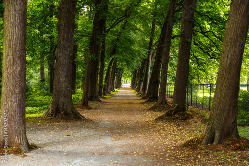 Foto op Plexiglas Antwerpen Path in Forest