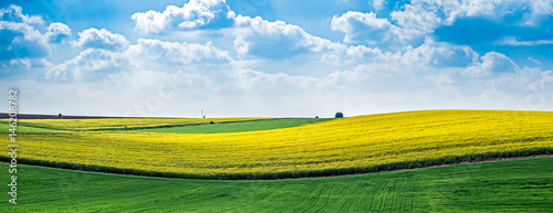Yellow rapeseed field against the blue cloudy sky