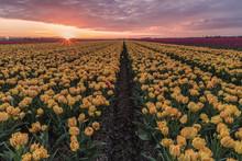 Dutch Spring Flowers, Beautifu...