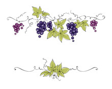 Design Elements -- Vine / Color Vector Illustration, Dark Red Grapes -- Drawing, Sketch