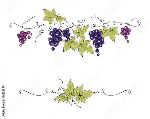 Design elements -- vine / Color vector illustration, dark red grapes -- drawing, sketch Fototapete