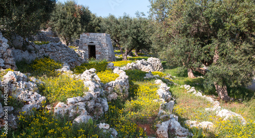 In de dag Grijze traf. Mediterranean landscape in Salento with olive trees, stones and walls, Italy