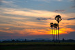 Silhouettes of palm trees against the sky during a tropical sunset.