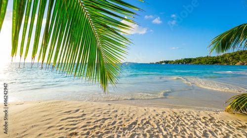 Stickers pour porte Palmier Palmen am tropischen Strand: Anse Lazio, Praslin, Seychellen