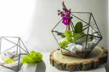 Glass Florarium Dodecahedron Succulent In Geometric Flowerpot In Flat Style