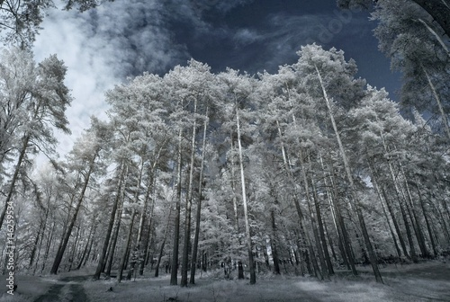 Foto  Landscape in infrared light