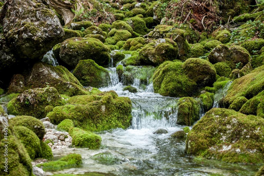 Fototapeta creek between stones covered with green moss