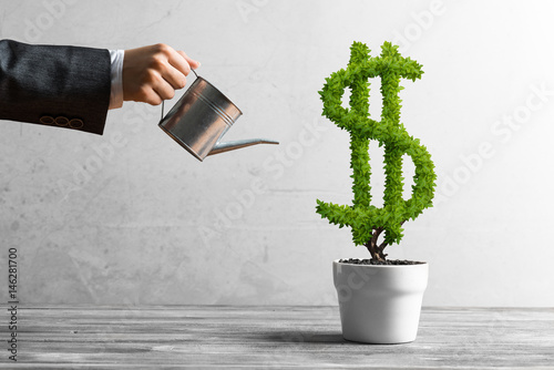 Fototapeta Concept of investment income and growth with money tree in pot obraz