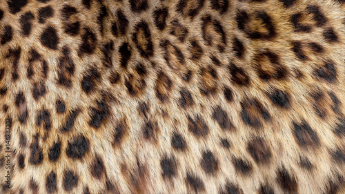 Poster Leopard Beautiful leopard fur blowing on the wind, luxury abstract natural texture, close up macro shot of animal hair.