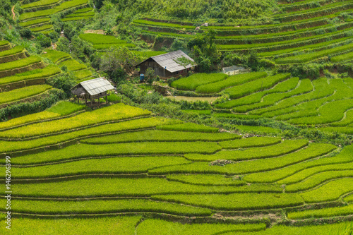 Fotobehang Rijstvelden Small farmer's accommodation for relaxing during farming in the rice terrace at Mu Cang Chai is a rural district of Yen Bai Province, in the Northeast region of Vietnam.