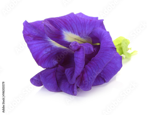 Spoed Fotobehang Pansies Butterfly Pea flower isolated on white background