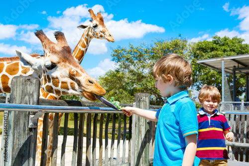 Photo  Two little kids boys and father watching and feeding giraffe in