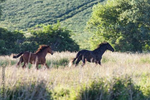 Pferde an der M  ritz