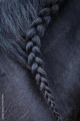 Fotografia, Obraz  Photo of horse mane with pigtail