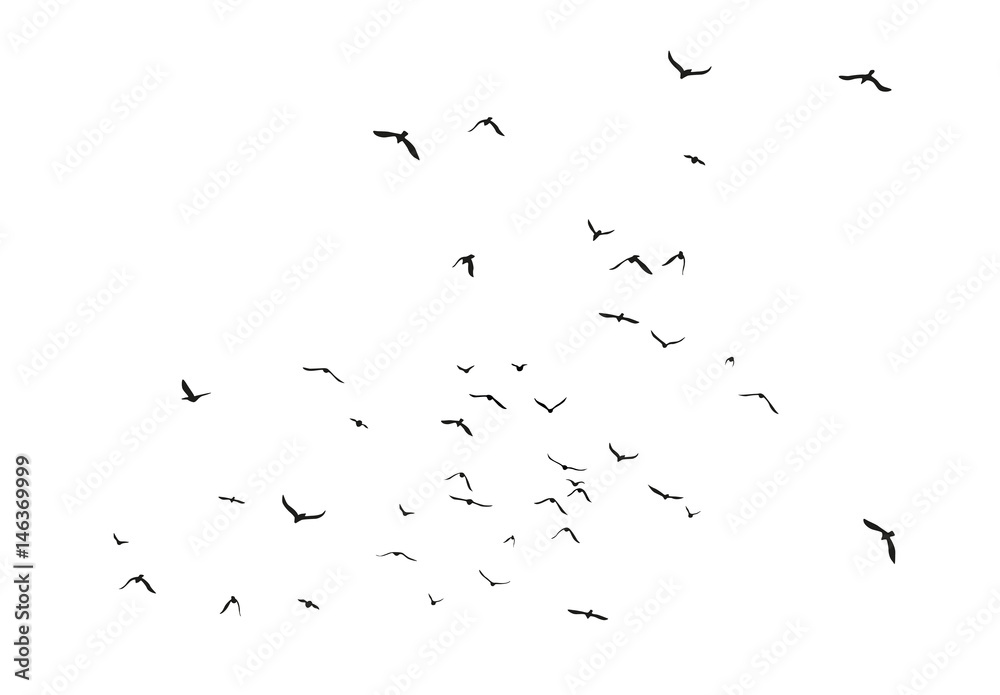 Fototapety, obrazy: Black vector flying birds flock silhouettes isolated on white background