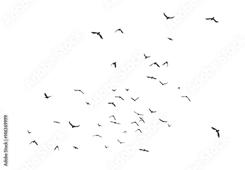Black vector flying birds flock silhouettes isolated on white background Canvas Print