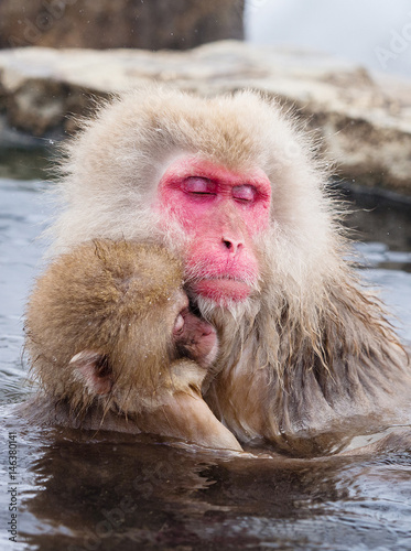 In de dag Portrait of a mother and child Japanese Snow Monkey in a hot spring, Jigokudani, Nagano, Japan.