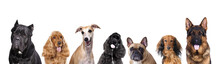 Portraits Of Dogs Of The Group...