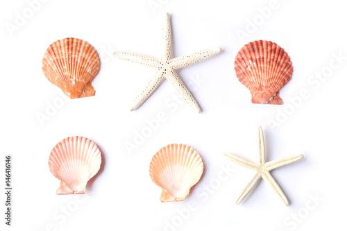 Fotografia Group of shell on white background