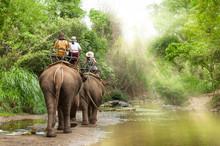 Group Tourists To Ride On Elep...