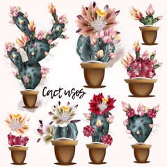 Fototapeta Egzotyczne Collection of vector cactuses in potters