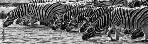 Staande foto Zebra Zebras Drinking, Etosha National Park, Namibia
