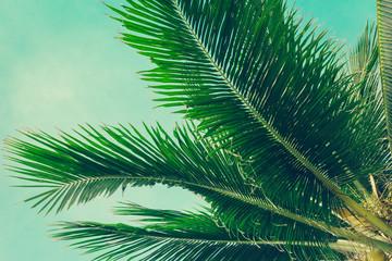 Fototapeta Vintage Coconut palm trees tropical background, vintage