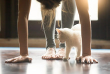 Yoga Fitness With Funny Pet Co...
