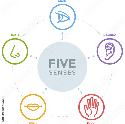 Five senses with complex line icons in a mind map design Fototapete