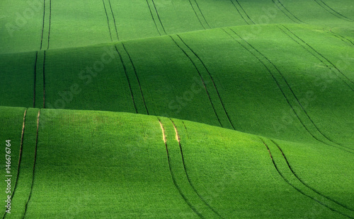 Foto auf AluDibond Grun Moravian green rolling hills of wheat that resemble corduroy with lines stretching into the distance. Fantastic landscape of the Czech Tuscany. Amazing fairy minimalistic spring green grass landscape