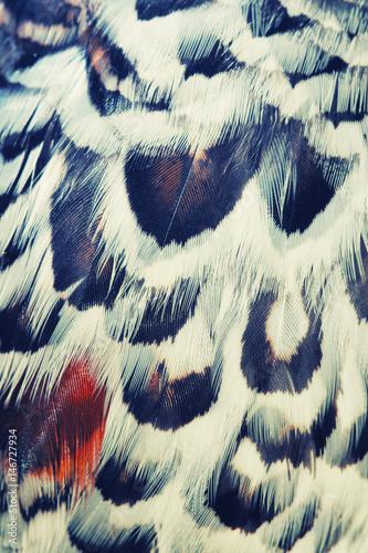 bird plumage background Wall mural