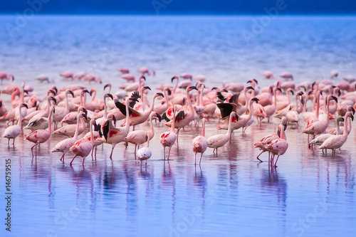 Cadres-photo bureau Flamingo Pink flamingo. Kenya.
