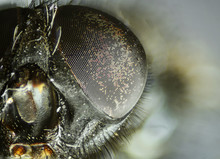 Fly's Eye Close-up View. Micro...