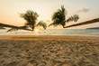 Tropical beach and coconut tree in summer